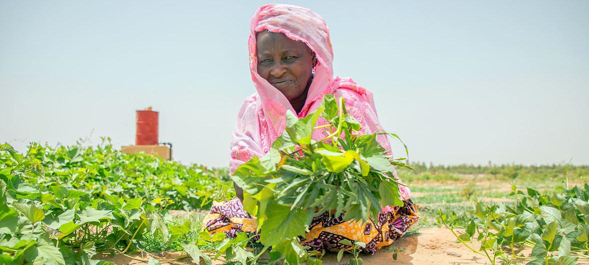 Una mujer en Malí trabaja en un huerto comunitario que forma parte del proyecto de fomento de la capacidad del Programa Mundial de Alimentos.