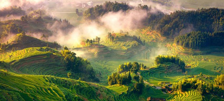 Los bosques brindan alimentos, albergue, energía, medicina e ingresos de manera directa a 1600 millones de personas.