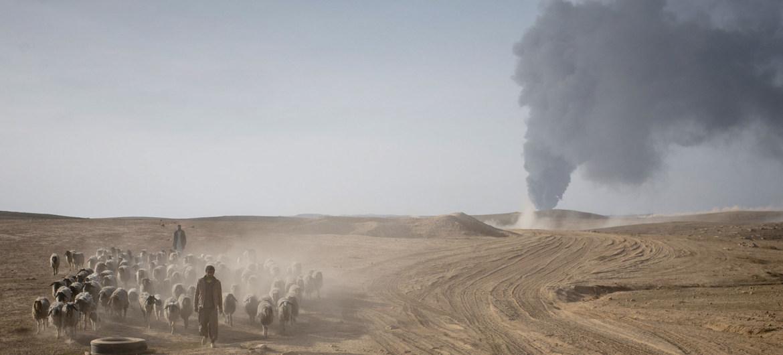 Un pastor conduce su ganado lejos de los combates entre las fuerzas iraquíes y el ISIL en el sur de Mosul, Iraq. (Foto de archivo)