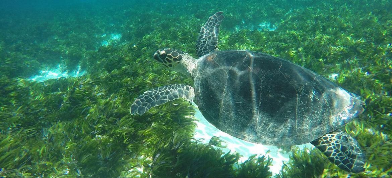 Las islas Seychelles en África se han comprometido para proteger a su biodiversidad marina.