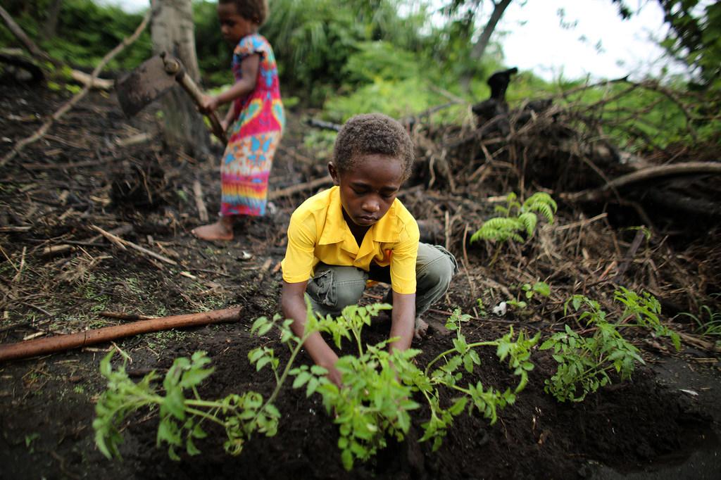 Las comunidades agrícolas del archipiélago del Océano Pacífico, como la isla de Vanuatu, se están adaptando a los patrones climáticos más secos.