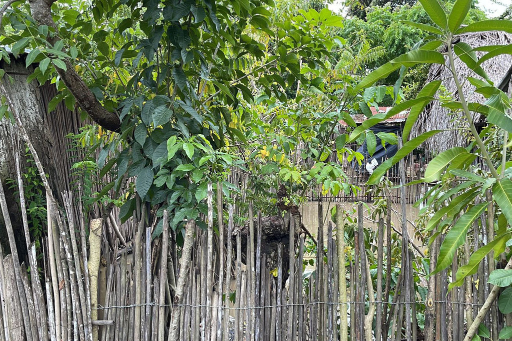 Con la llegada de la pandemia, Rosa Duarte tomó cursos de formación de hortícultura.