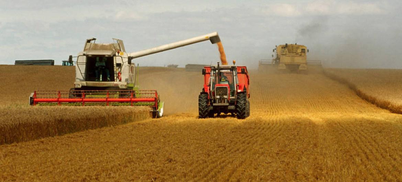 La FAO defiende que el trigo, uno de los tres cereales más consumidos del mundo, puede cultivarse masivamente de forma sostenible. Foto: FAO/Olivier Thuillier